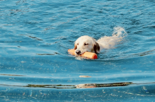 泳ぐ犬.png
